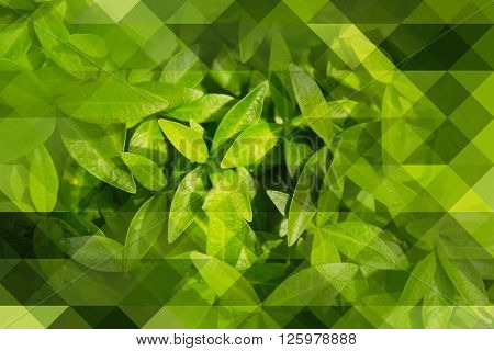 Beautiful spring leaves, abstract background