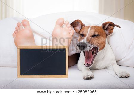 Sleeping Dog And Owner