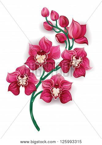 branch artistically painted a bright pink orchids on a white background. Design with orchids.