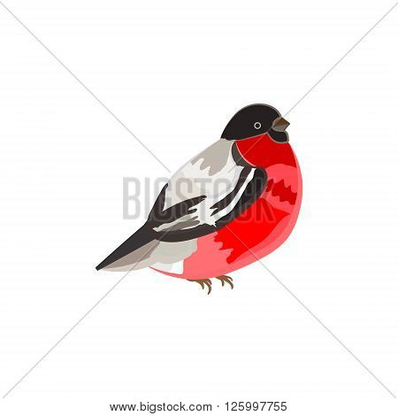 bullfinch bird. vector image. isolated on a white background