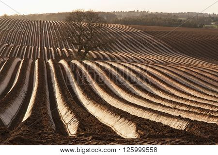 Tracks From Heavy Machinery In Muddy Farmland Showing Farming Technics From Around The World