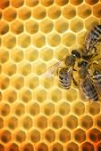 image of honey bee hive  - Honey Bees - JPG
