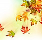 stock photo of fall leaves  - Falling Autumn Leaves - JPG
