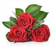 stock photo of red rose flower  - Beautiful red Roses over white - JPG