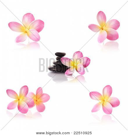 frangipani flowers and black pebbles on white background