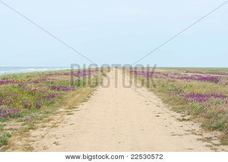 Landscape With Road And Sea On Arabat Spit In Crimea, Ukraine