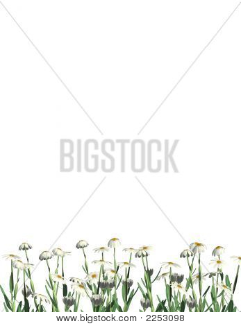 Daisies Bottom Border - Letter Sized