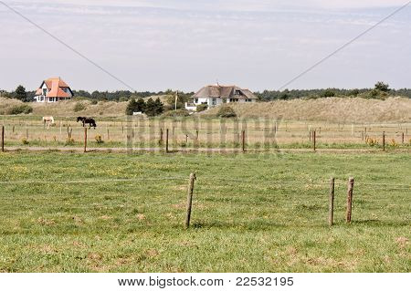 Pasture With Houses And Dunes At Ameland
