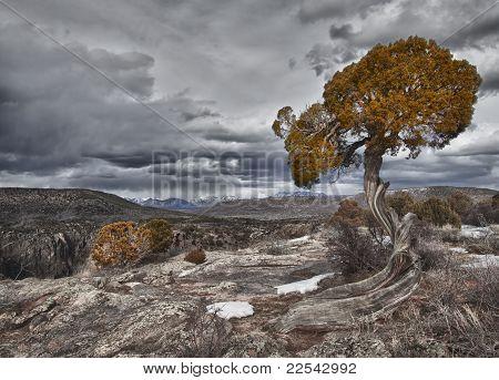 Árvore no cânion negro de Gunnison, Co