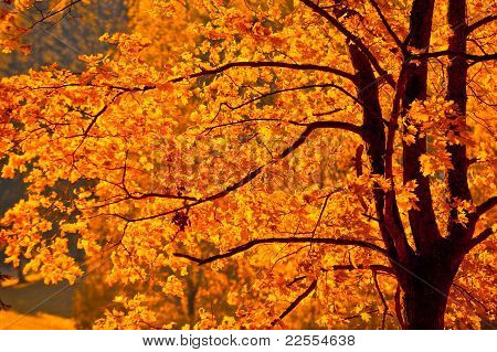 Autunm Tree