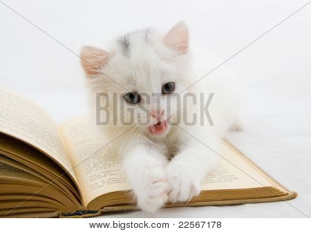 Kitten On Book