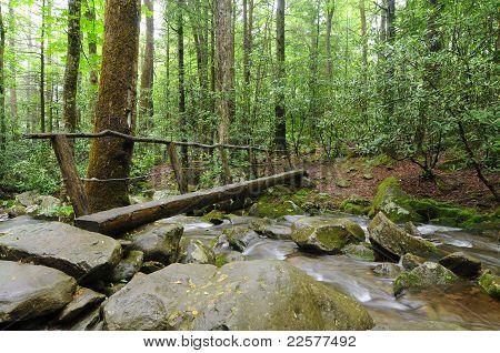 Bridge Above Stream
