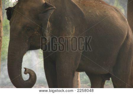 Elefante de lavado