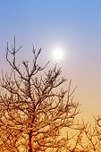 Winter Nature. Winter Forest Landscape In Early Winter Morning- Deciduous Frosty Tree Under Winter S poster