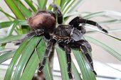 Tarantula Sits On A Beautiful Background poster