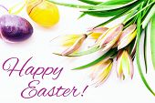 Happy Easter. Easter Eggs And Crocuses Spring Flowers On White Background With Copy Space. Border Te poster