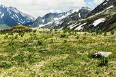 Alpine Meadows And Flower Meadows Against The Backdrop Of Peaks. Idyllic Scene Of High Mountains, Hi poster