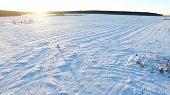 Aerial View On Man Walking In Taiga Or Snow Field. Siberia, Endless Taiga. A Man Skiing Wanders Thro poster