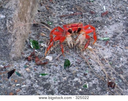 Mister Crabs