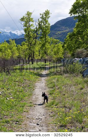 dog in a countryside trail