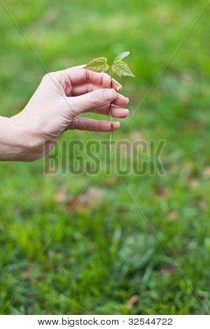 Hand Holding A Small Tree Over Green