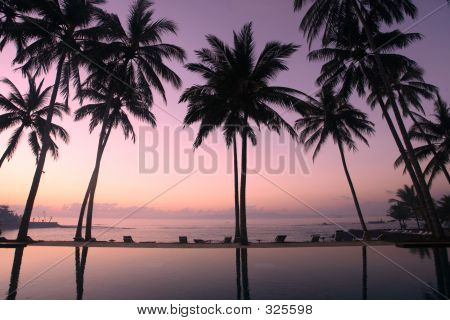 Coconut Trees At Sunrise