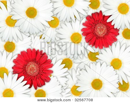Background Of Red And White Flowers