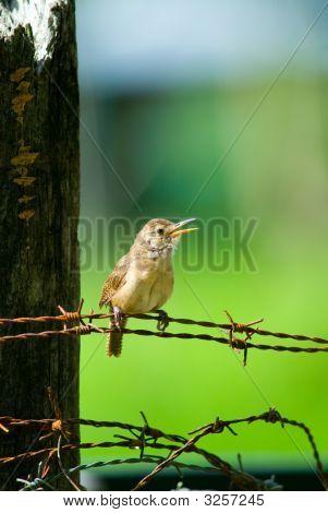 Small Chirping Bird
