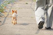 A Small Dog Walks Next To The Owner. Dog At The Feet Of The Owner poster