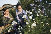 Two Pacific Islander girls picking wildflowers with basket