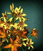 image of asiatic lily  - a bouquet of lilies in orange and yellow colors - JPG