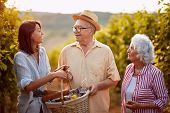 Wine and grapes. Harvesting grapes. Wine and grapes. Harvesting grapes. Happy family in vineyard bef poster