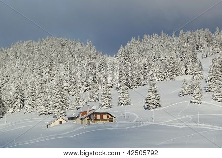 House And Fir Tree In Winter, Jura Mountain, Switzerland