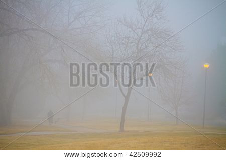 Foggy Park Morning