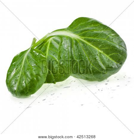 fresh green leaves spinach or pak choi macro isolated on a white background
