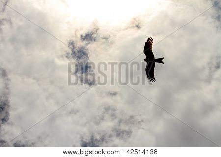 Hawk Silhouette Flying In The Clouds