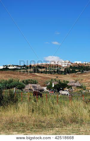 kleiner Bauernhof, Medina Sidonia, Andalusien, Spanien.