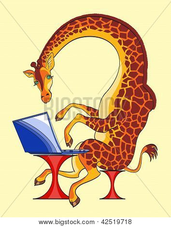 Giraffe And Laptop