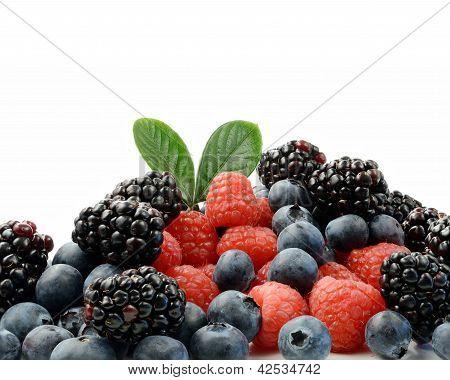Berries Macro