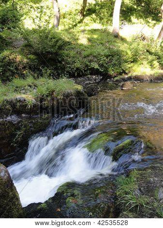River Forest Landscape