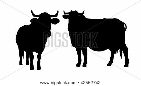 Silhouette Of A Cow And A Bull