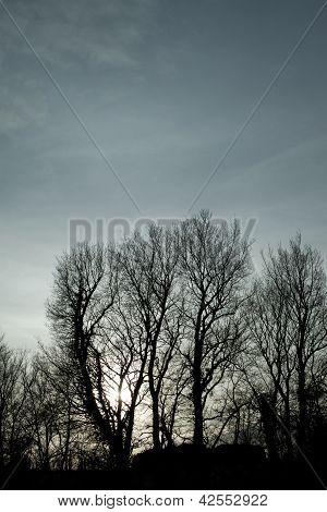 Árvores em uma cena de paisagem ao pôr do sol