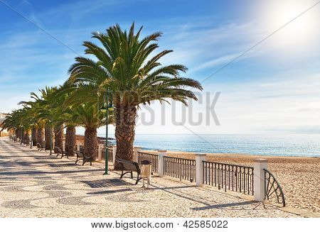 Boulevard On The Beach With Palm Trees Near The Ocean.