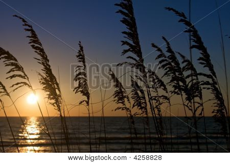 Beachgrass Sunset
