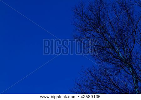 White Birch Tree And Blue Sky
