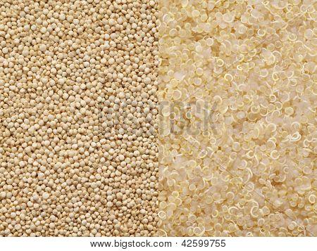 cooked quinoa and uncooked quinoa