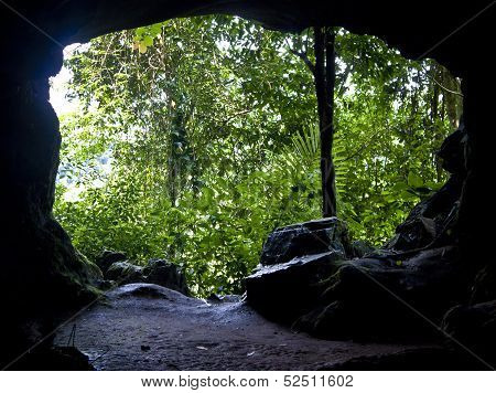 View from cave to a jungle
