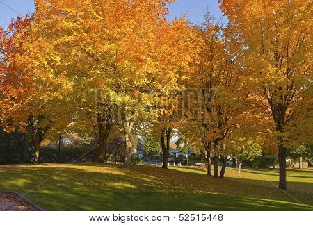 Autumn Colors In A Park.