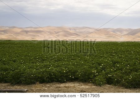 Lush Green Farm Land Agriculture Field California United States