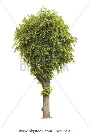 Isolated Tree